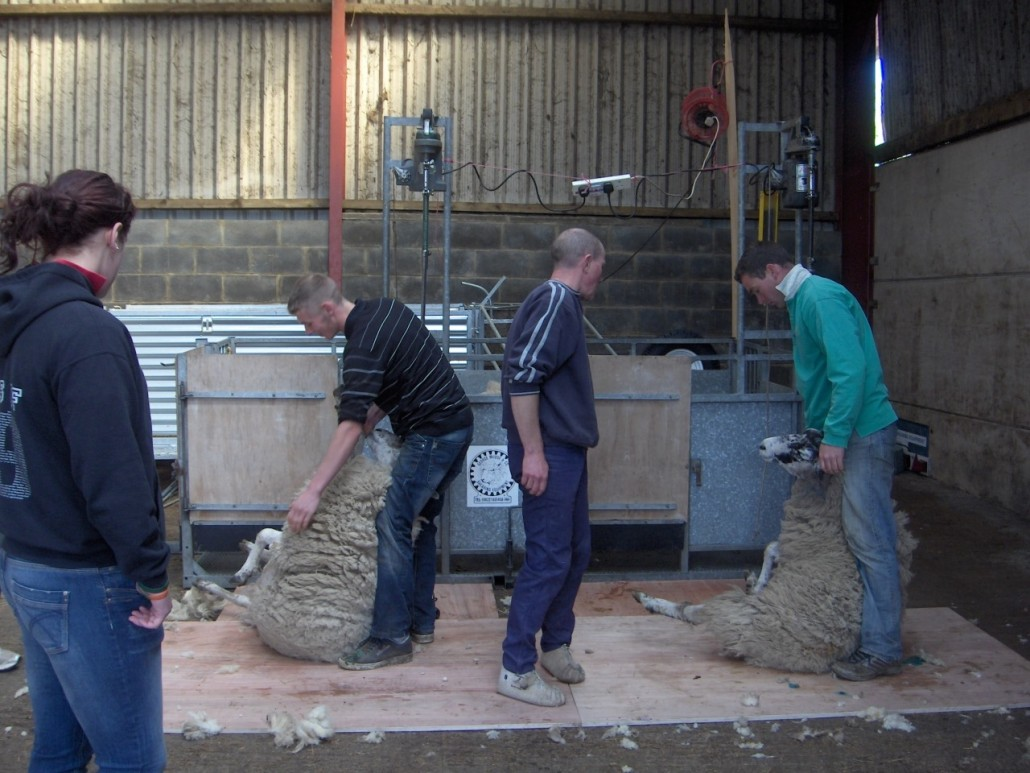 Locality Map project - training - shhep shearing 3