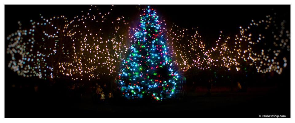 New Christmas lights